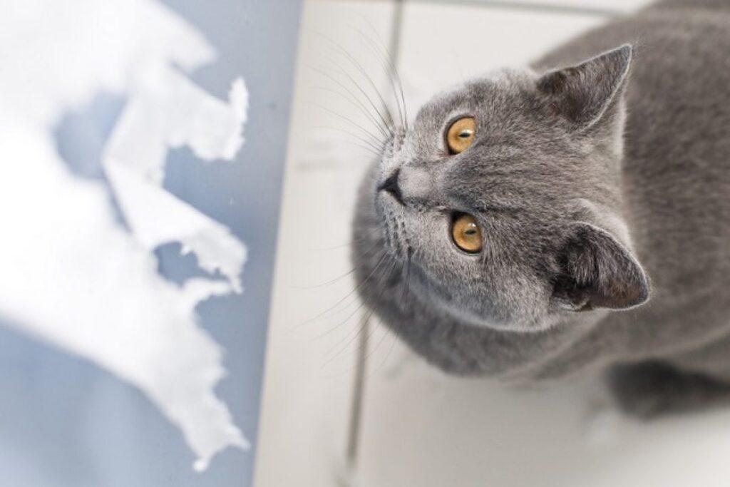 gatto guarda la carta igienica