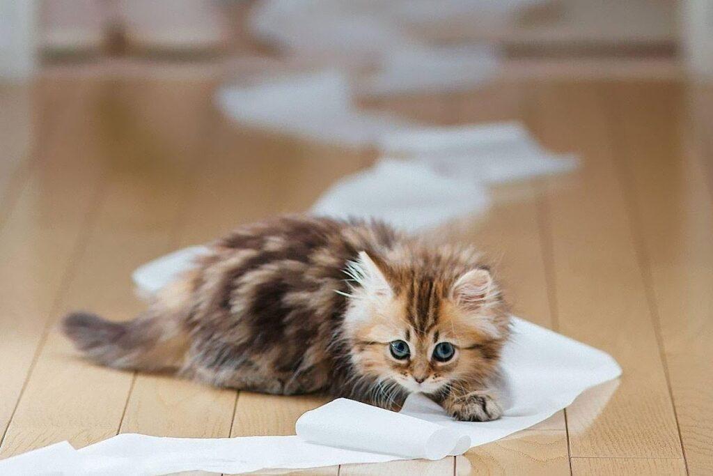 gattino gioca con la carta igienica