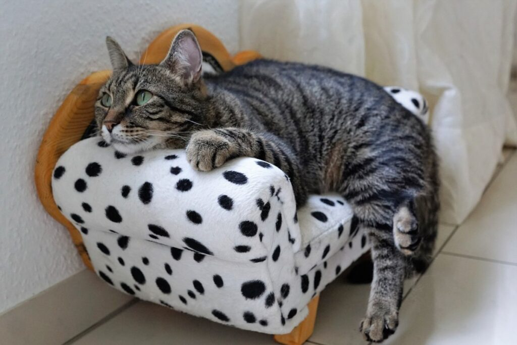 gattino nel divanetto