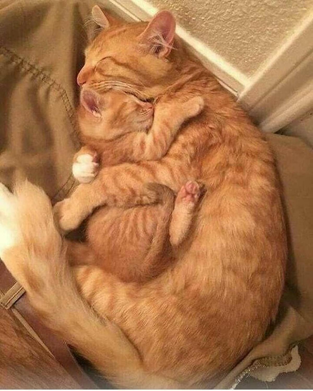 papà e gattino