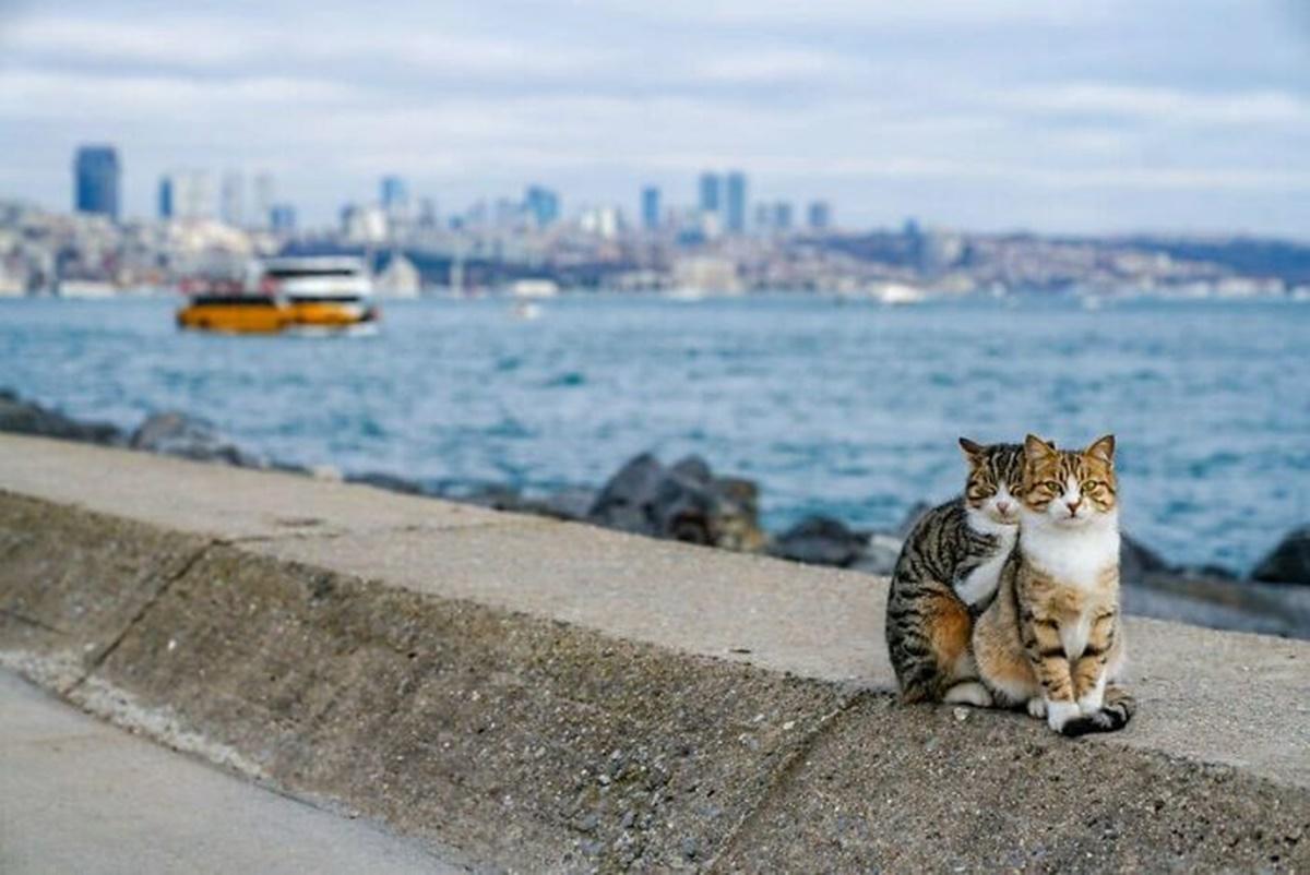 gatti su panorama