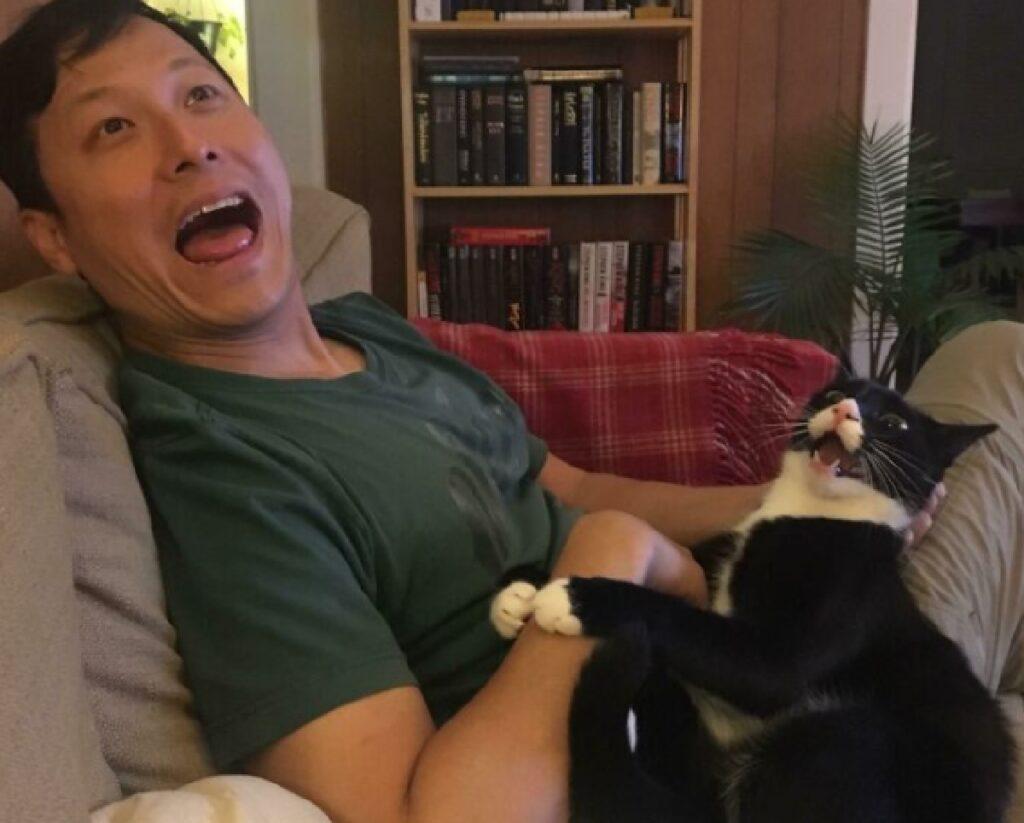 gatto tuxedo apre bocca