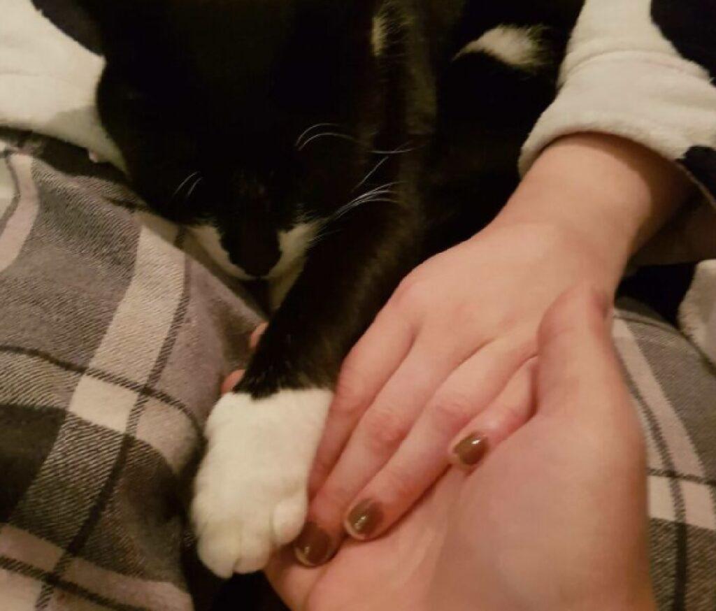 gatto mano nella zampa