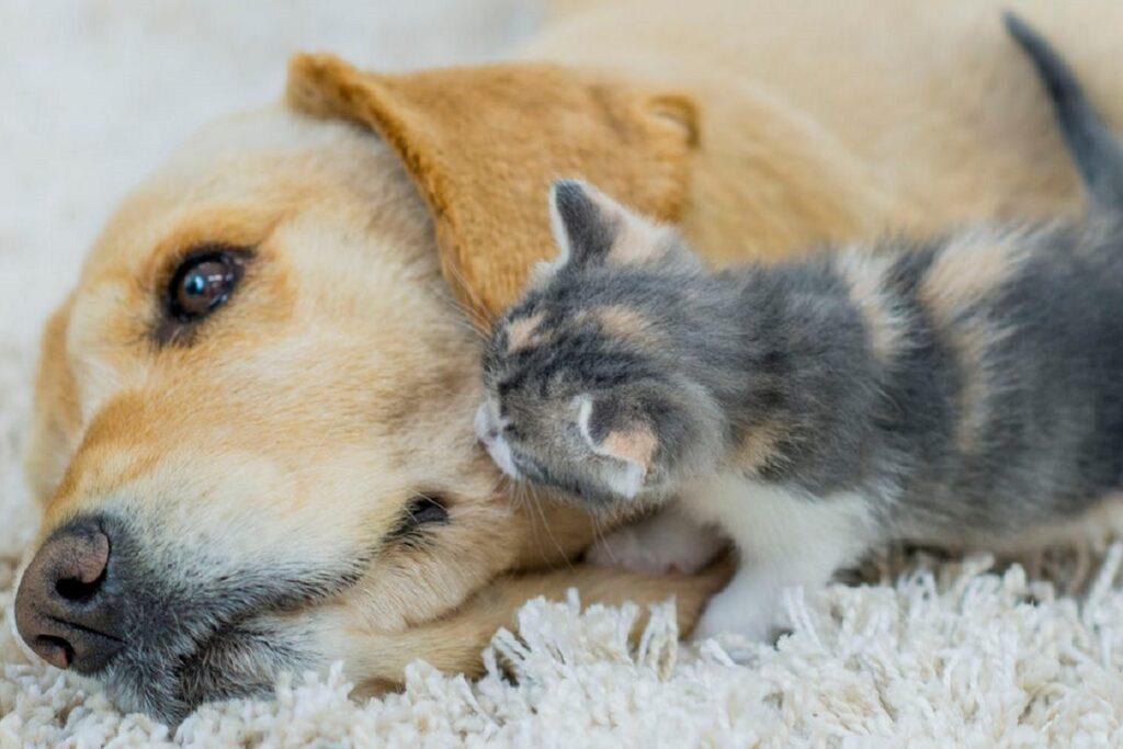 gattino annusa un cane