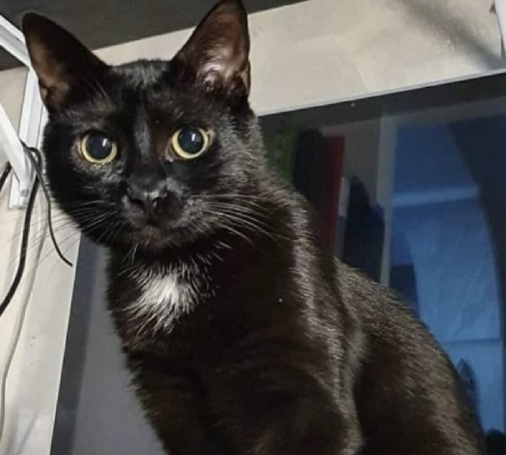 gatta morgana nera davanti finestra