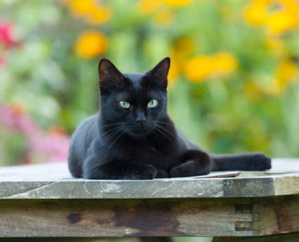 gatto nero seduto giardino