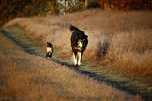 un cane cammina accanto a un gatto