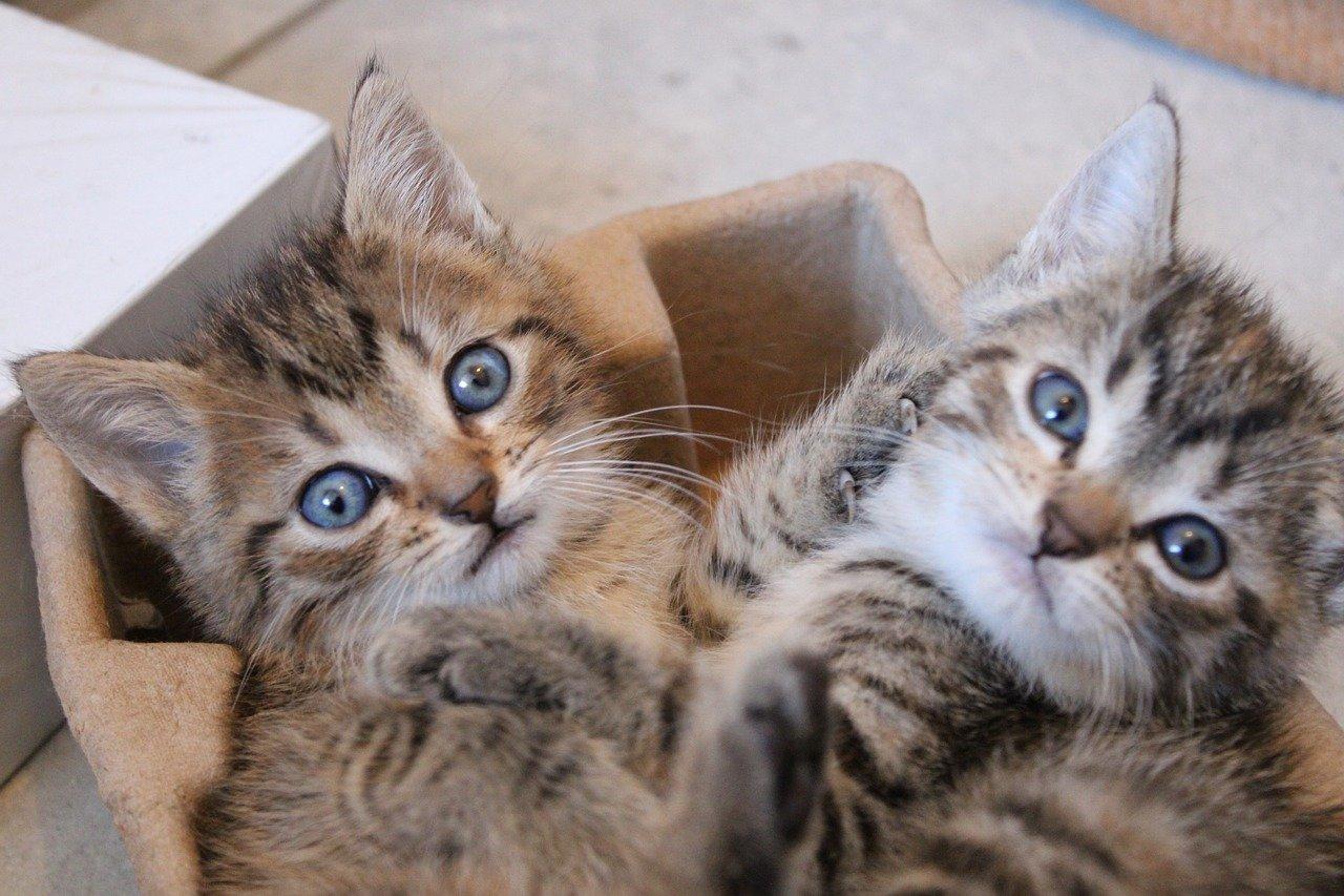 gattini giocano