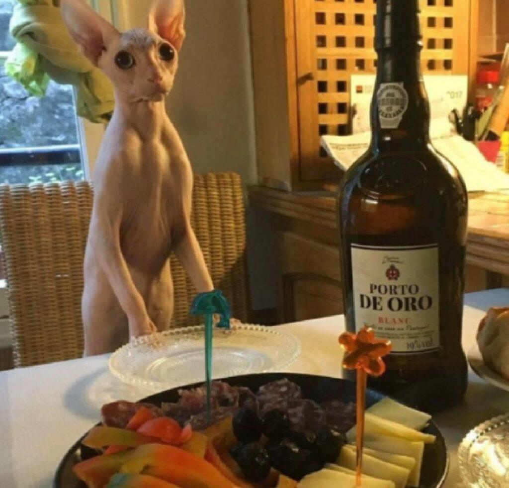 gatto fissa bottiglia aperitivo