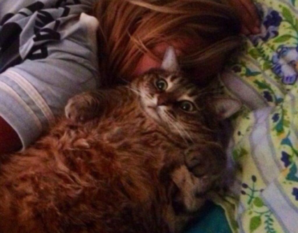gatto occhi sbarrati letto