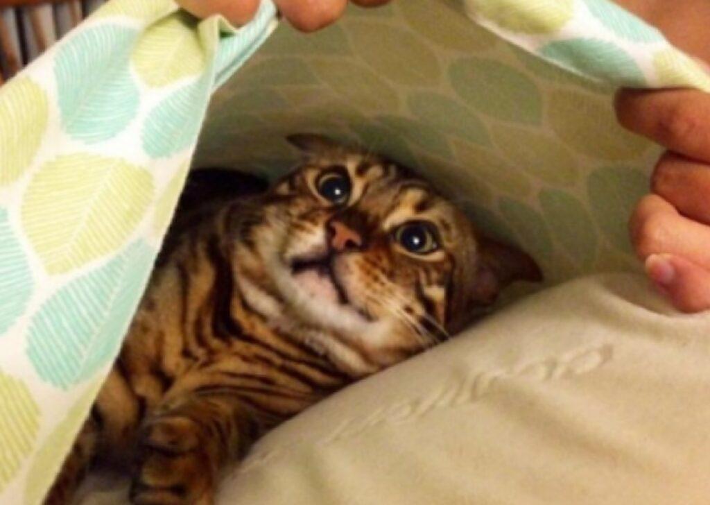 gatto sotto lenzuola letto