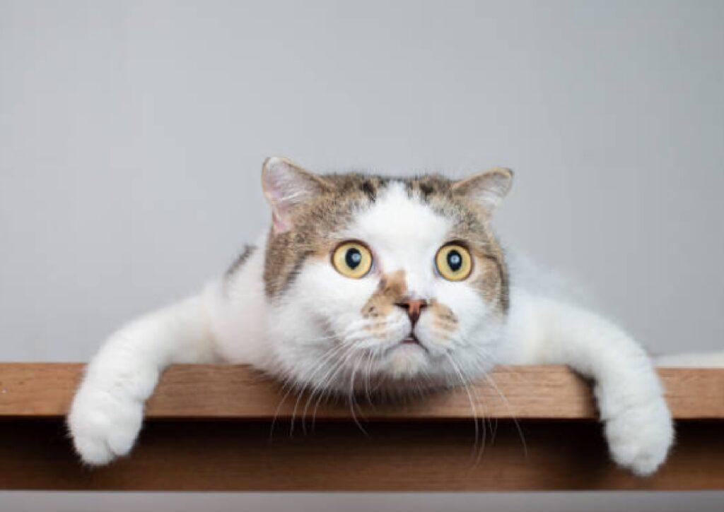 gatto scioccato dal momento