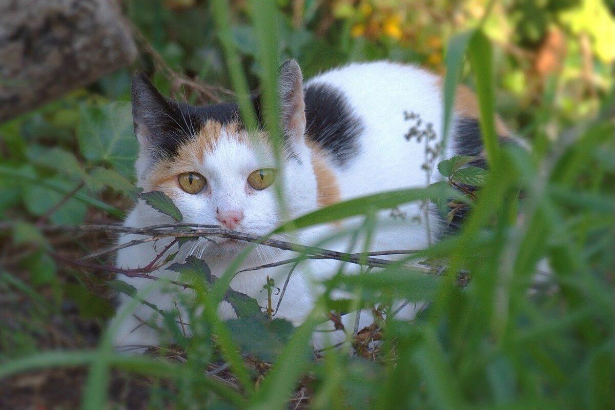 gatto in giardino