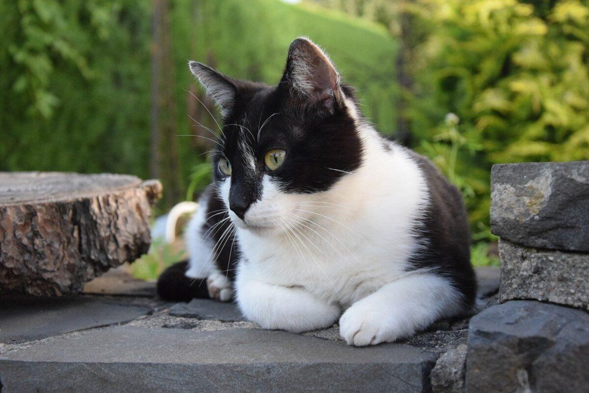 gatto in esterno