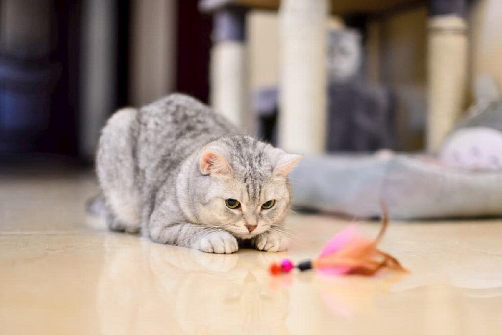 gattino gioca per terra