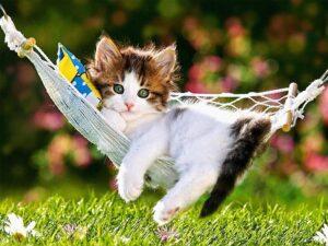 gattino sdraiato su un'amaca