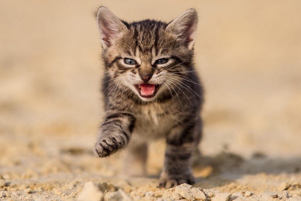 gattino lasciato da solo