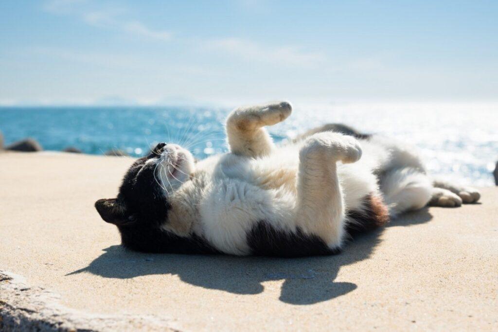 gatto disteso sulla sabbia