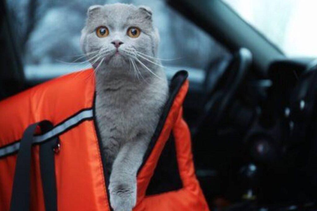 gatto nel kennel in auto