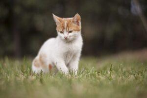 gatto si diverte in giardino