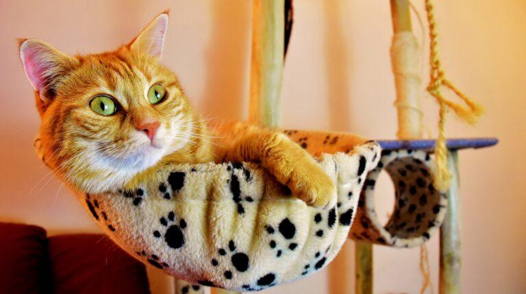 gatto nel tiragraffi