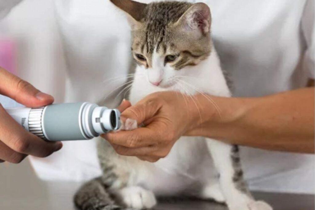 tagliaunghie elettrico per gatto
