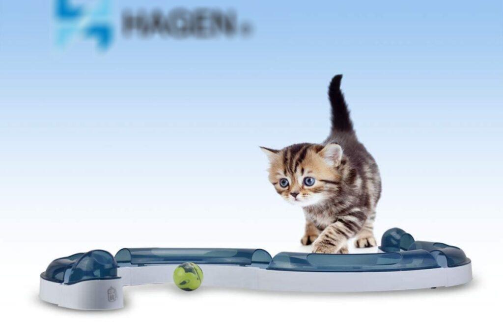 circuito giocattolo per gatti