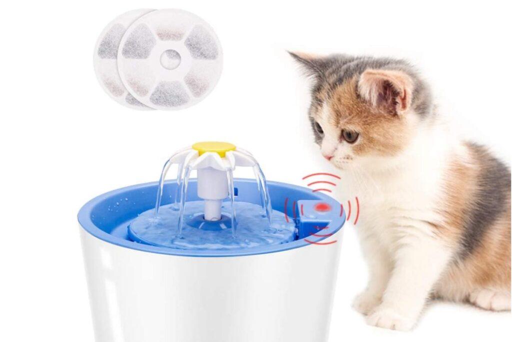 fontanella d'acqua per gatti