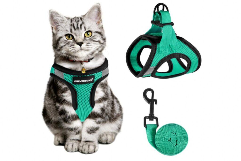 pettorina colorata per il gatto