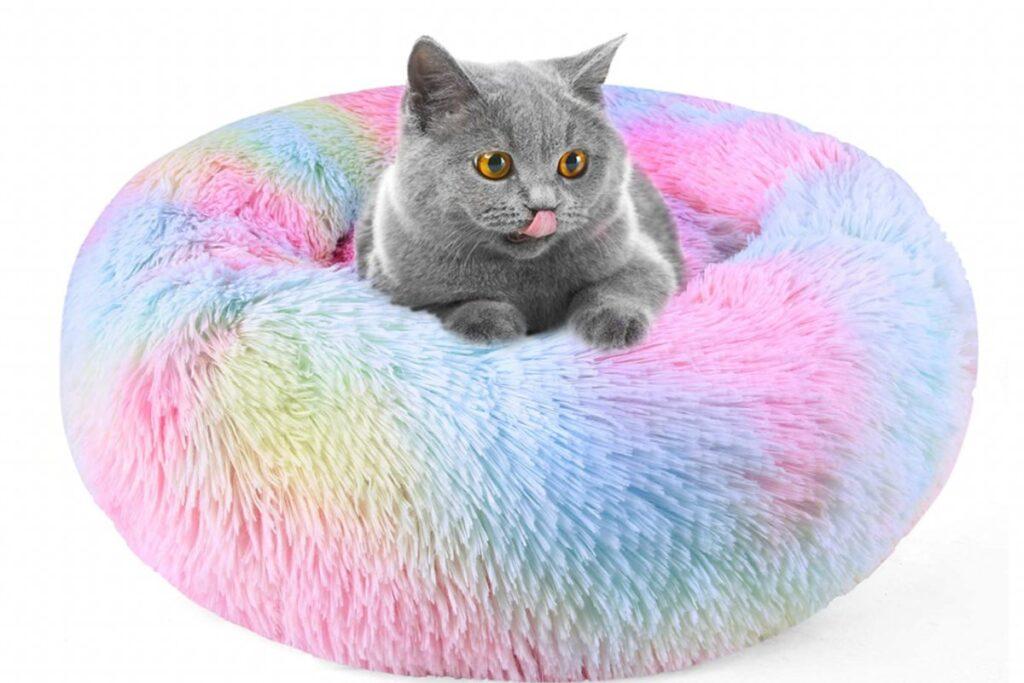 gatto su un lettino peloso tutto colorato