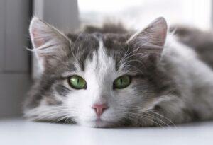 da che mondo vieni gatti fin troppo particolari