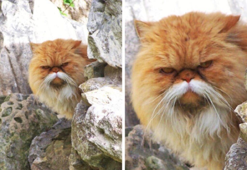 gatto baffi bianchi corpo rosso