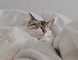 micio dorme coperte