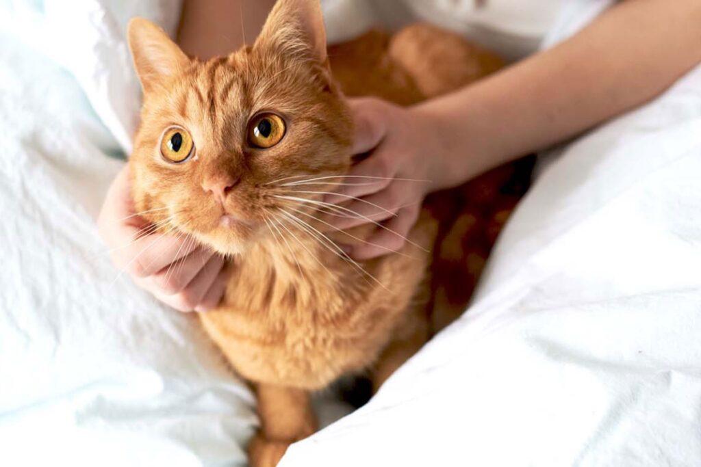 gatto fra le lenzuola