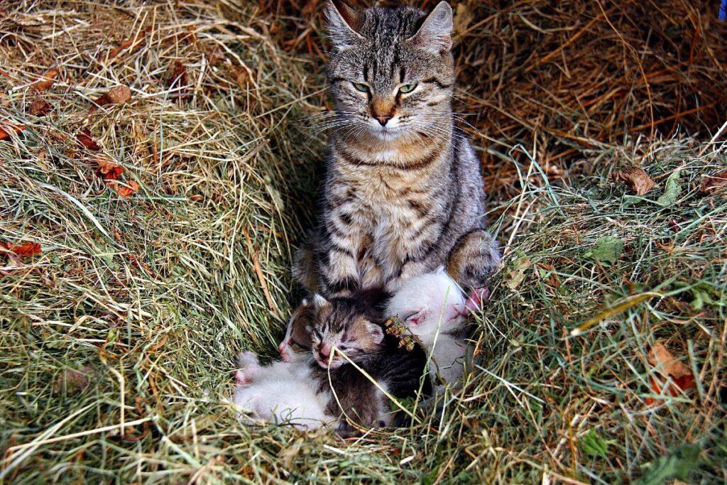 mamma gatta e cuccioli in giardino