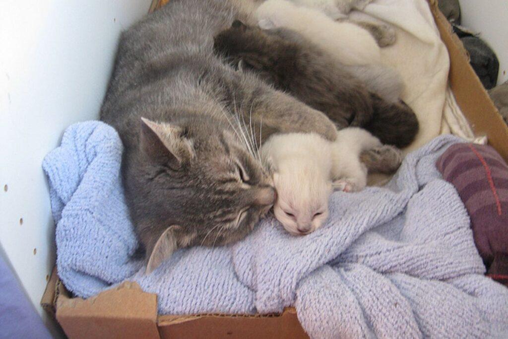 mamma gatta e i gattini