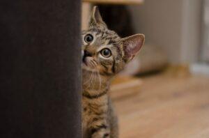 gattino timido porta