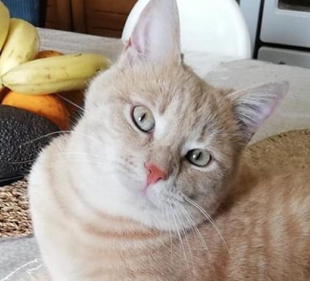 gatto sem testa spostata verso destra