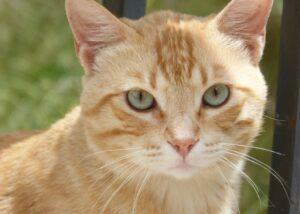 smarrito gatto sem appello social toccante