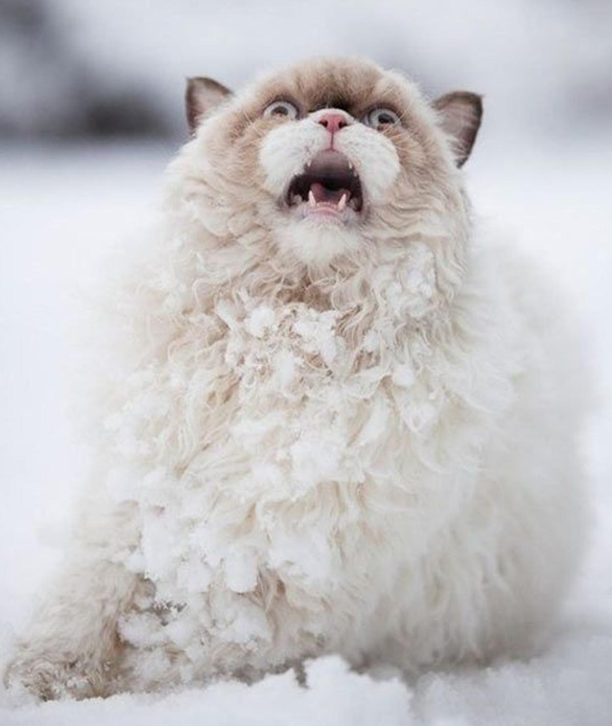 gatto disperato