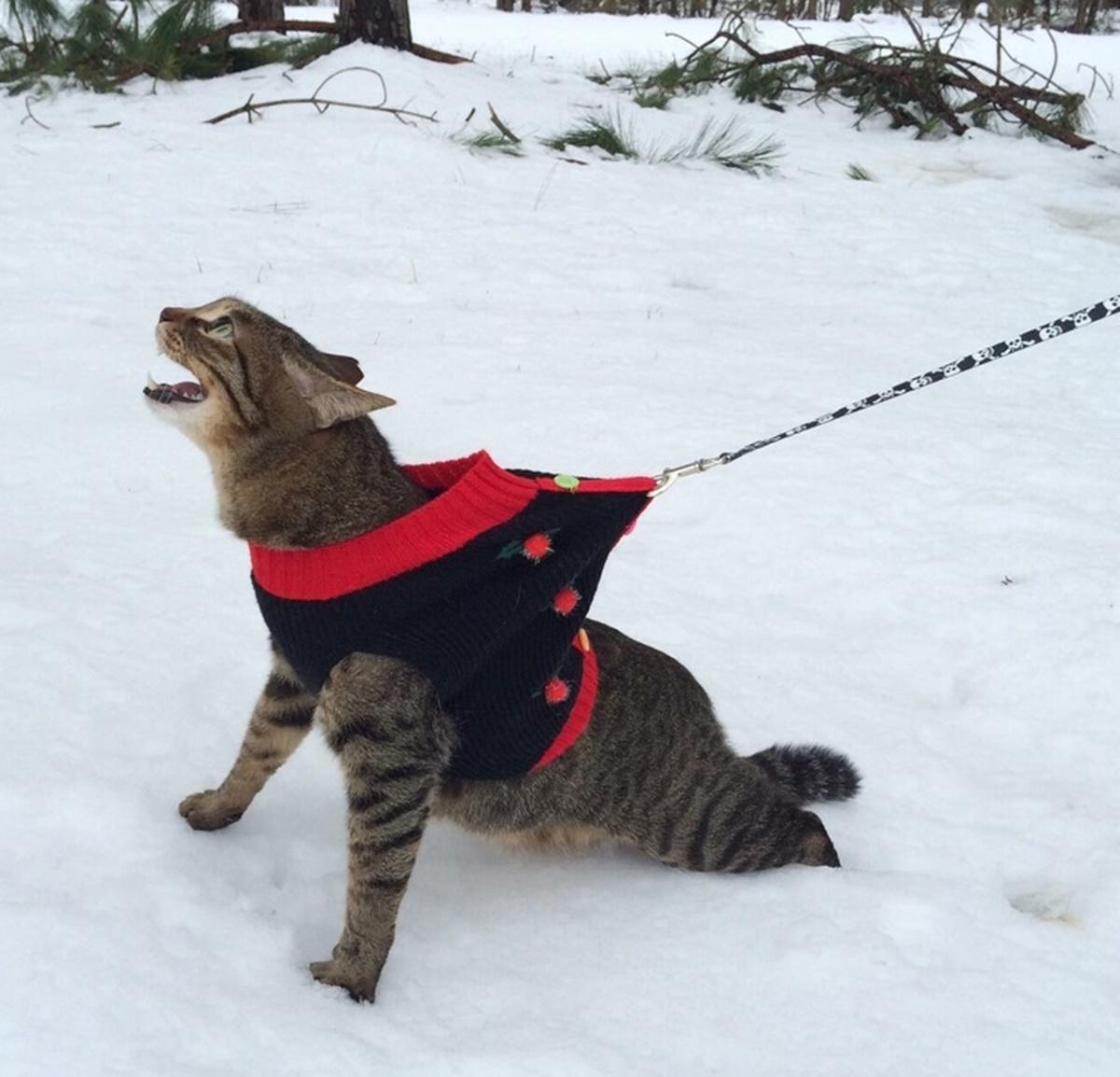 gatto corre verso casa