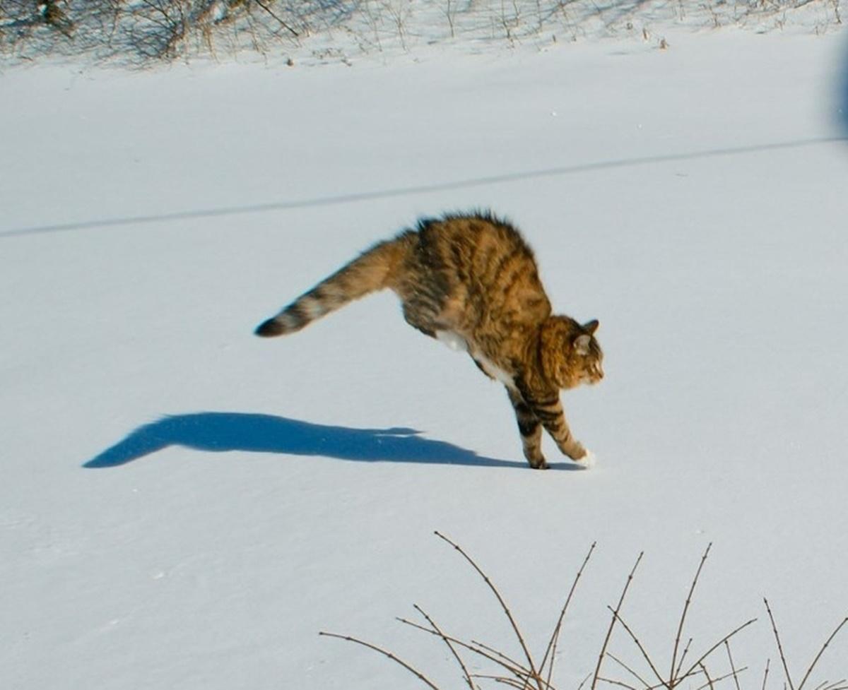 gatto non tocca neve