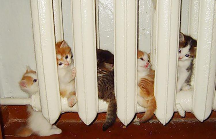 gatti sul termosifone