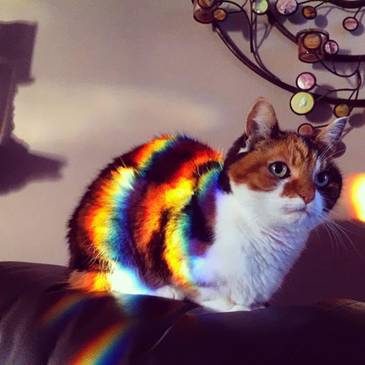 gatto arcobaleno