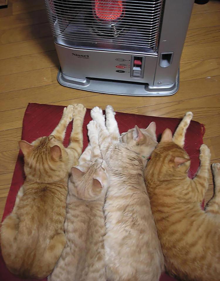 gatti rossi che si riscaldano