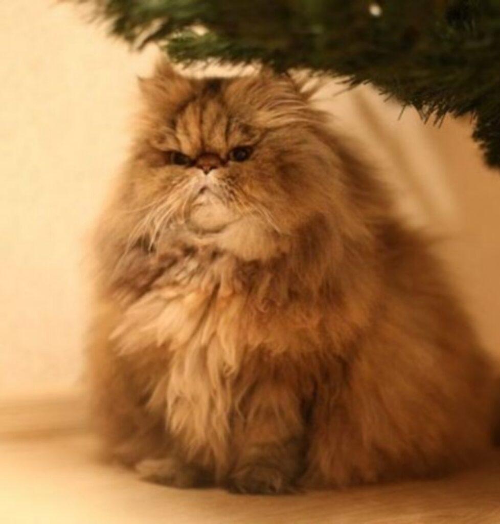 gatto micio stupendo
