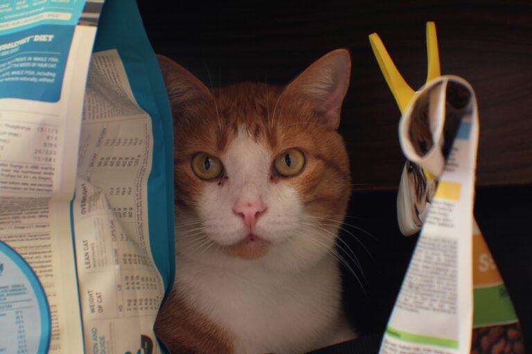gatto tra buste di cibo