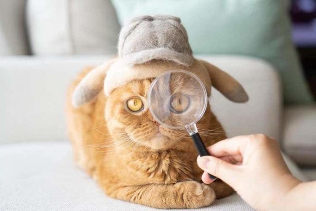 gatto ispettore