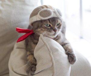 gatto vola grigio