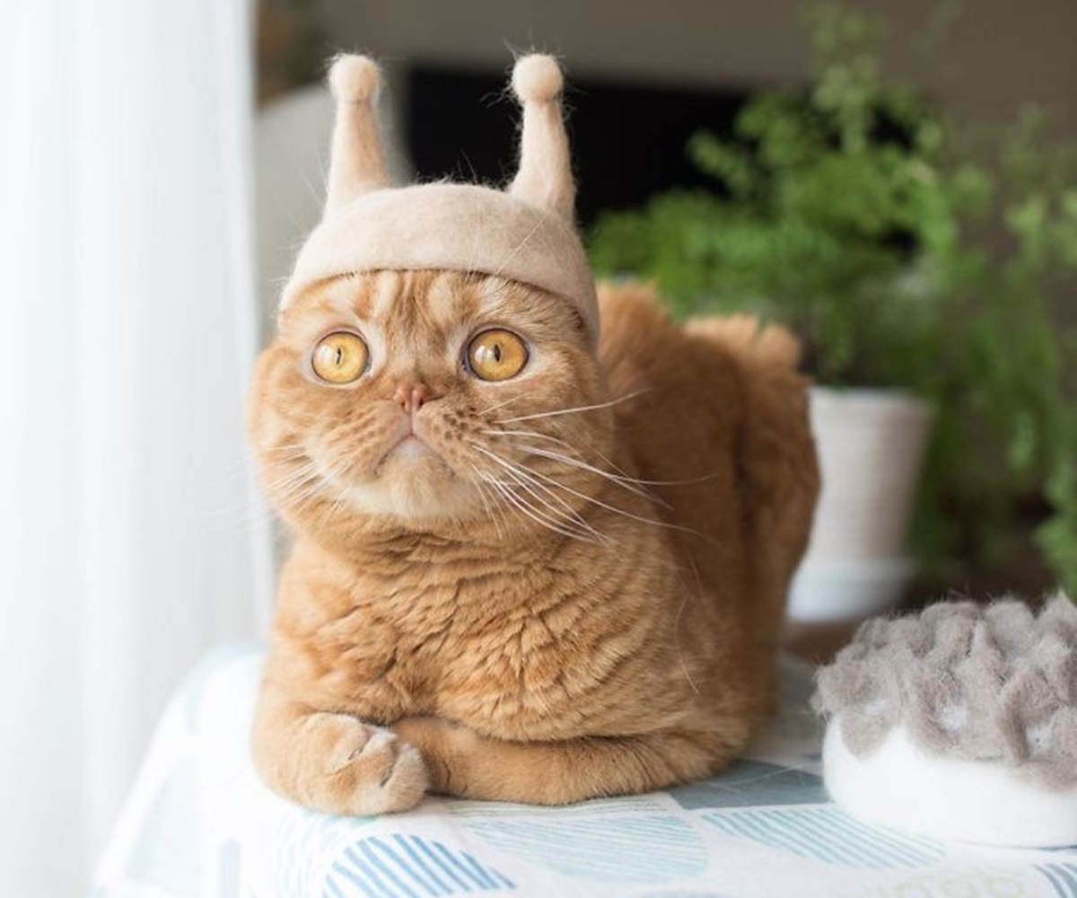 gatto antenne